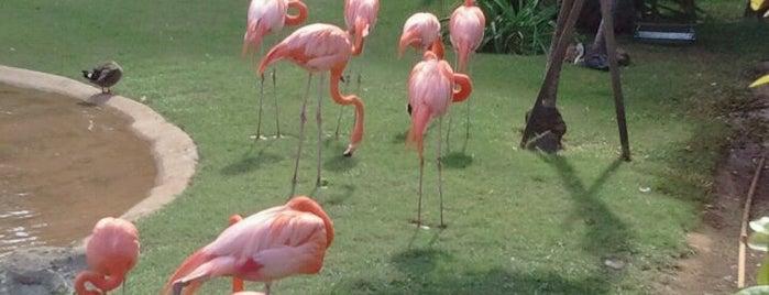 Honolulu Zoo is one of Honolulu: The Big Pineapple #4sqCities.