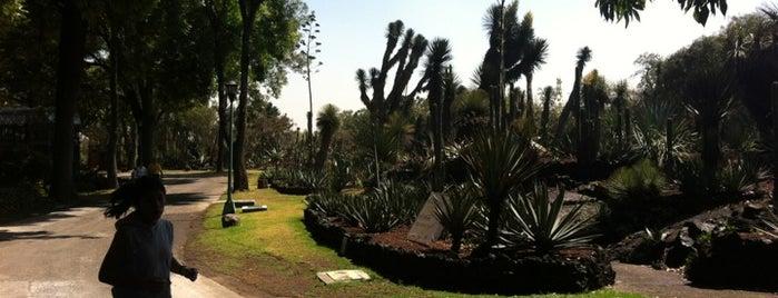 Jardín botánico del Instituto de Biología, UNAM is one of Algunos lugares....
