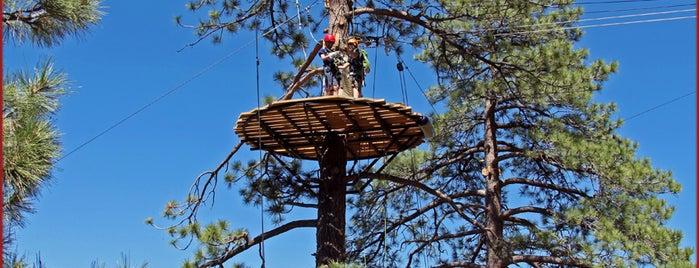 Navitat Canopy Adventure is one of Insiders' Picks.
