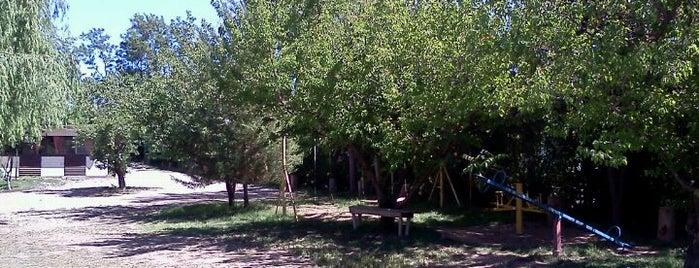 La Picada De Juanera is one of Lugares guardados de Andres.