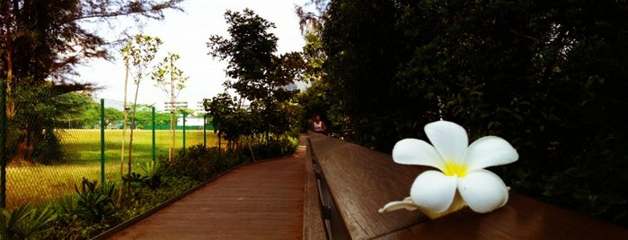 Berlayer Creek (Mangrove Trail Boardwalk) is one of Trek Across Singapore.