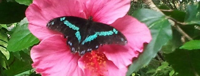 Butterfly Pavilion is one of The Best of Denver, CO #visitUS.