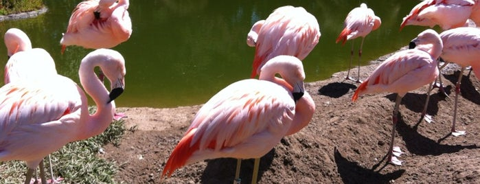 Flamingo Pond is one of SF.