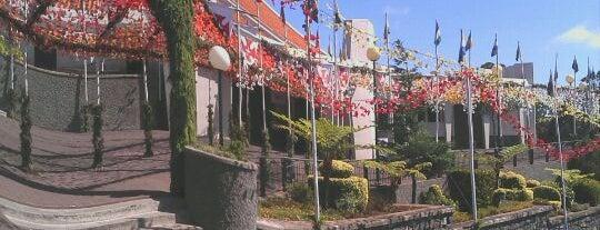 Camacha is one of Madeira.