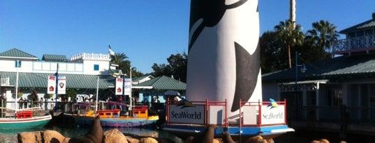 SeaWorld Orlando is one of My vacation @Orlando.