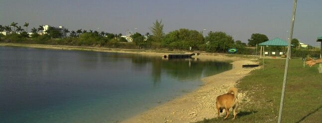 Tigertail Lake Dock Jumping And Doggie Beach is one of Carl 님이 좋아한 장소.