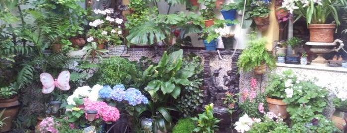 Casa-Patio de la calle Pozanco, 6 is one of Visita virtual a los Patios de cordoba.
