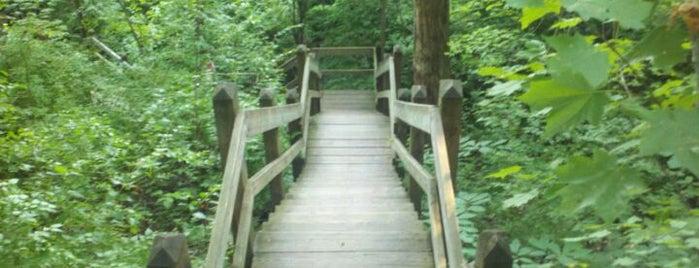 Castlewood State Park is one of Yunus : понравившиеся места.