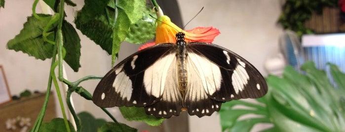 Музей живых бабочек «Тропический рай» is one of Lugares guardados de Alex.