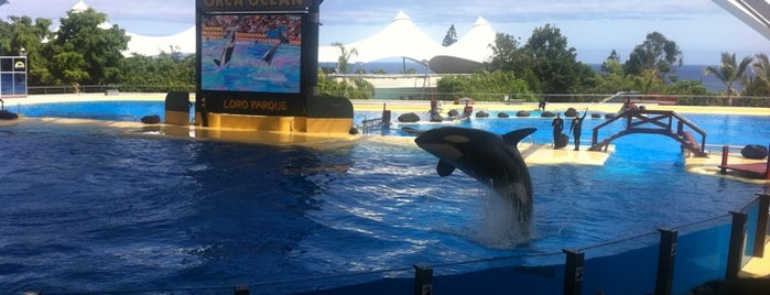 Loro Parque is one of Lugares favoritos.