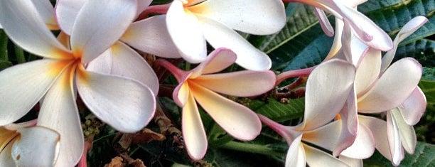 City of Honolulu is one of Hawaii 2014 LenTom.