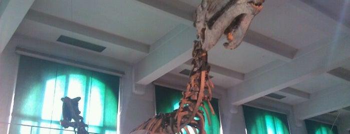 "Museo Argentino de Ciencias Naturales ""Bernardino Rivadavia"" is one of Lugares Interesantes."