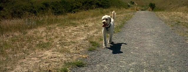 Lethbridge Dog Run is one of Dog Parks.