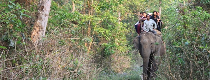 Chitwan National Park, Nepal is one of Lugares guardados de Tim.