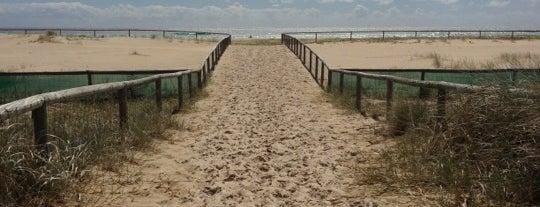 Kirra Beach is one of Australia.