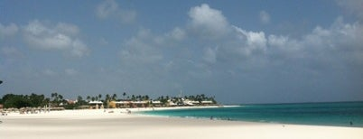 Divi Aruba All Inclusive is one of Posti che sono piaciuti a Carey.