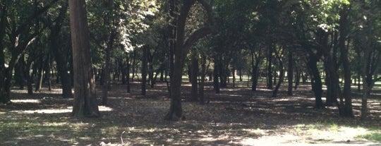 Bosque de Chapultepec is one of Turismo en Ciudad de México.