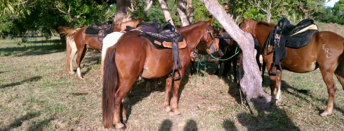 Esperanza Riding Company is one of Orte, die Andrea gefallen.