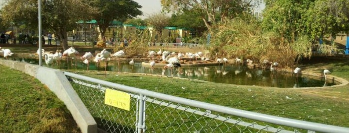 Riyadh Zoo is one of Best Places in Riyadh.