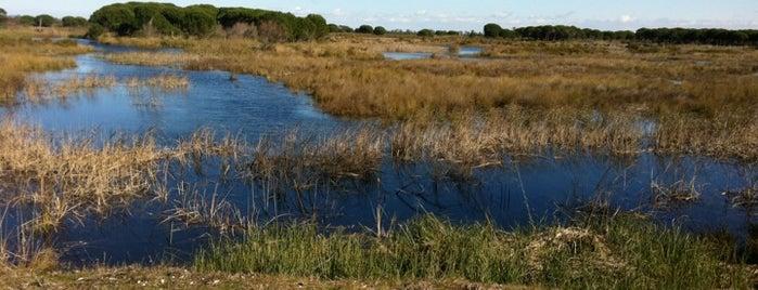 Centro De Visitantes Del Parque De Doñana El Acebuche is one of Buitenland.