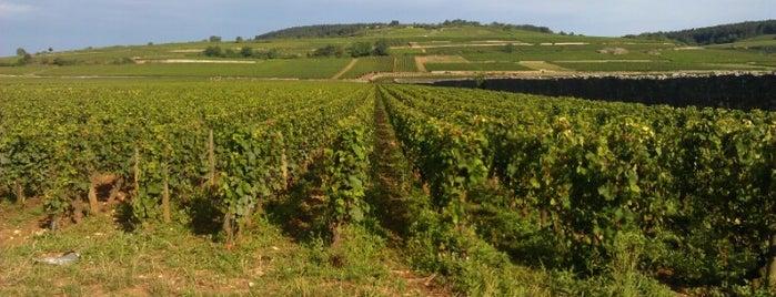 Pommard is one of Burgundy.