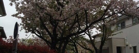 成城の桜並木 is one of せたがや百景 100 famous views of Setagaya.