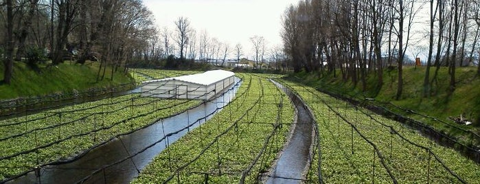 Daio Wasabi Farm is one of Lieux qui ont plu à Masahiro.