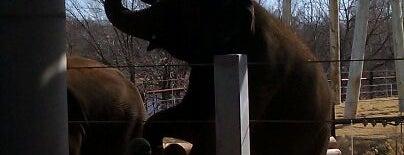 Elephant Habitat is one of Sheila 님이 좋아한 장소.