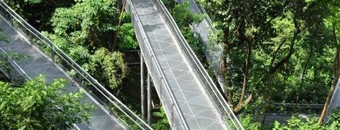Forest Walk is one of Singapura.