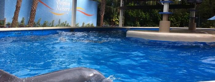 Dolphin Nursery is one of My vacation @Orlando.