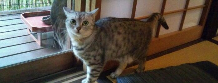 夢屋 is one of Favorite Cats.