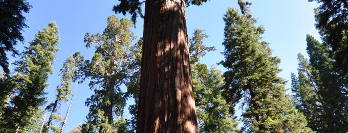 Sequoia & Kings Canyon National Parks is one of wonders of the world.