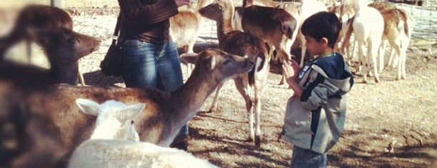 Deer Farm And Petting Zoo is one of Cralie 님이 저장한 장소.