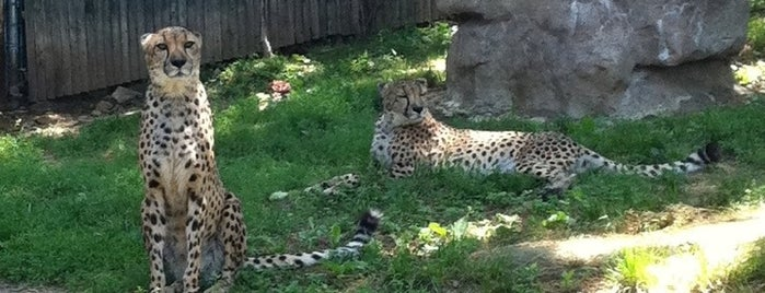 Philadelphia Zoo is one of Best Places to Check out in United States Pt 4.