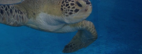 Texas State Aquarium is one of Top Zoos and Aquariums in the US and Canada.
