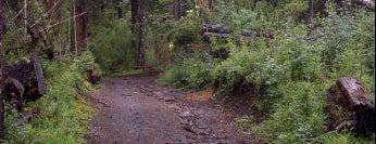 Parque Nacional Villarrica is one of Patagonia (AR).