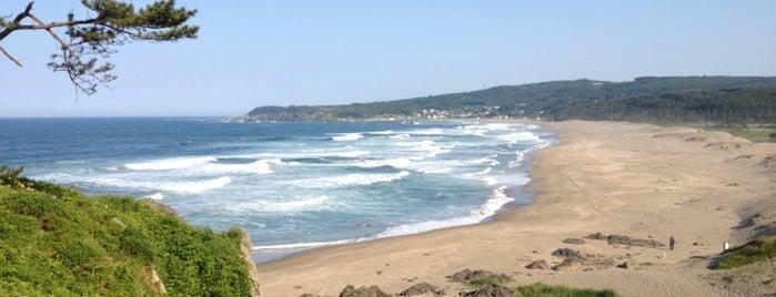 大須賀海岸 is one of 日本の渚百選.