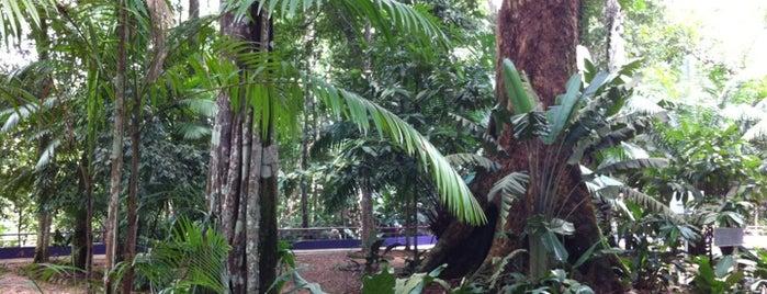Instituto Nacional de Pesquisas da Amazônia (INPA) - Campus I - Bosque da Ciência is one of Adelino 님이 좋아한 장소.