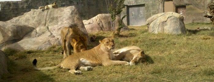 Zoos of Texas