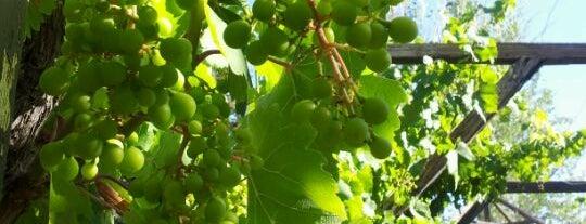 Cavas de Don Arturo is one of Wines.