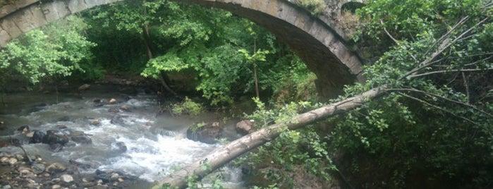 Şelale Alabalık Tesisi - Yuvacık Barajı is one of yenilesi.