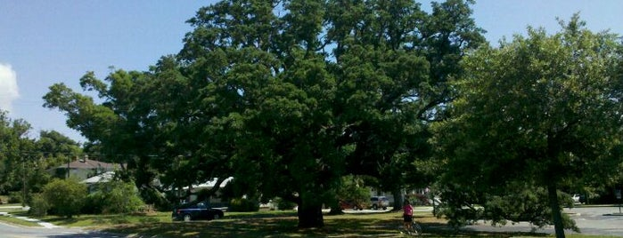 Big Oak Tree is one of Great Outdoors - Top Picks.