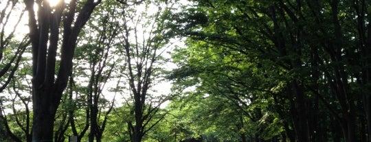 Yoyogi Park is one of Tokyo Favourites.