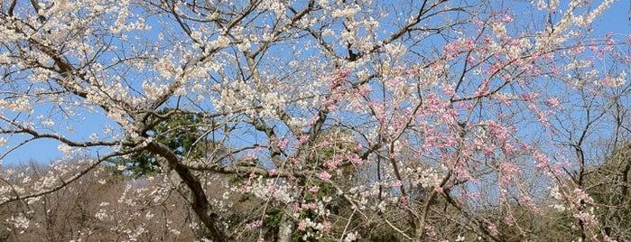 愛知県森林公園(尾張旭森林公園) is one of East Nagoya.