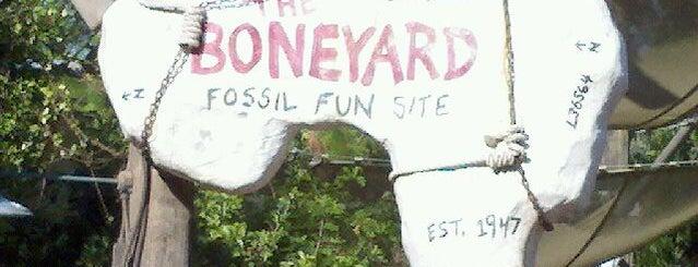 The Boneyard is one of Lizさんのお気に入りスポット.