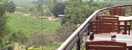 Monsoon Valley Vineyard is one of HOTEL.