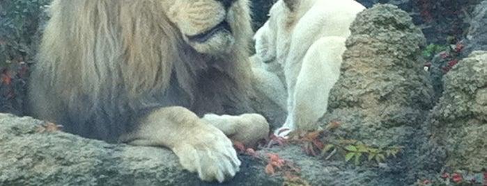 Philadelphia Zoo is one of Badge of Brotherly Love #visitUS.