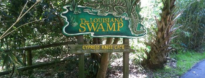 Swamp At Audubon Zoo is one of Lieux sauvegardés par Laura.