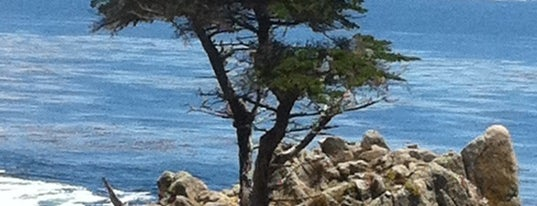 The Lone Cypress is one of US Landmarks.
