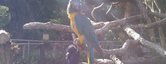 Fort Worth Zoo is one of Zoos of Texas.